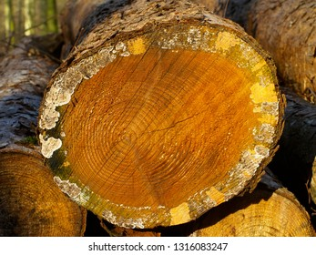 Closeup on a stack of wood in the forest