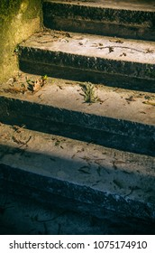 Closeup on stone steps with fallen foliage under soft sunlight