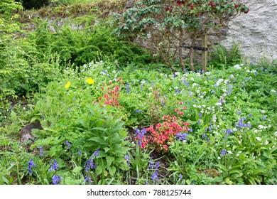 Closeup on Wildflowers