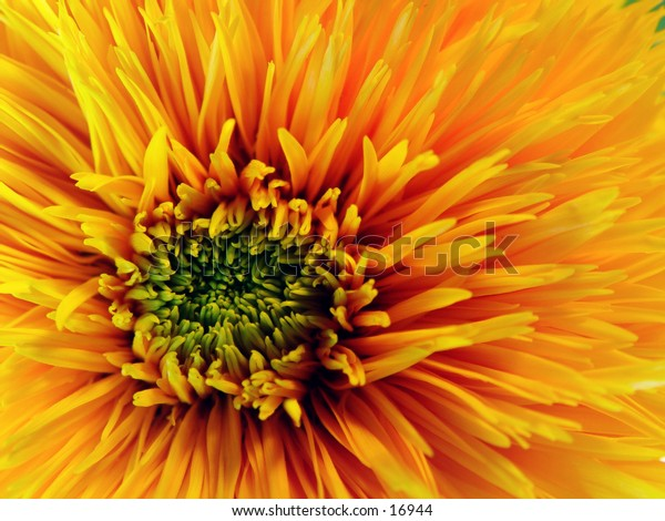 A closeup on a yellow flower