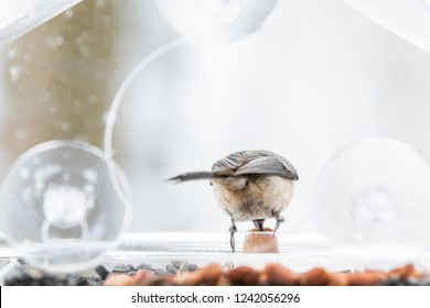 Closeup of one chickadee bird back perched on plastic glass window feeder perch, sunny day, looking down, holding peanut nut, seed during heavy snow, snowing, snowstorm on sunny day in Virginia