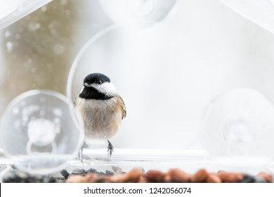 Closeup of one chickadee bird sitting perched on plastic glass window feeder perch, sunny day, looking during heavy snow, snowing, snowstorm on sunny day in Virginia