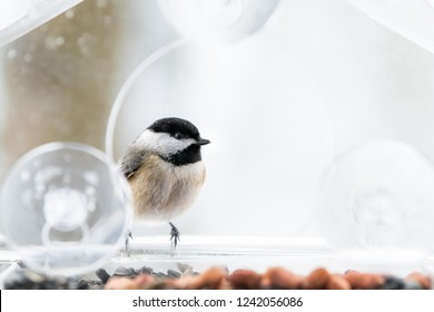 Closeup of one chickadee bird sitting perched on plastic glass window feeder perch, sunny day, looking during heavy snow, snowing, snowstorm on sunny day, Virginia