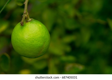Closeup one lime on green blur background in natural farm