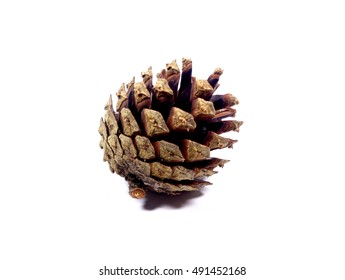 Close-up of one natural pine cones isolated on white background