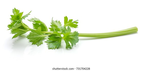 Close-up one stick of fresh celery with leaves isolated on white background