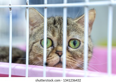 Closeup of one tabby kitten cat looking through a cage