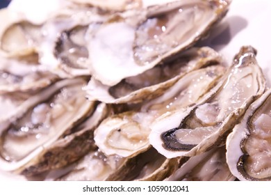 Closeup of opened oysters on a bed of ice