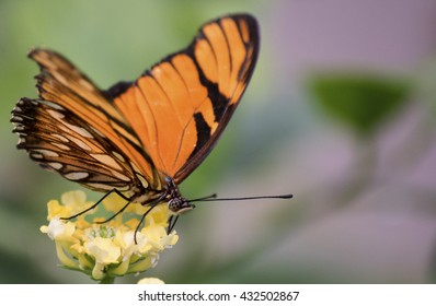 Closeup of an Orange Butterfly sitting on a flower in Artis Zoo, Amsterdam