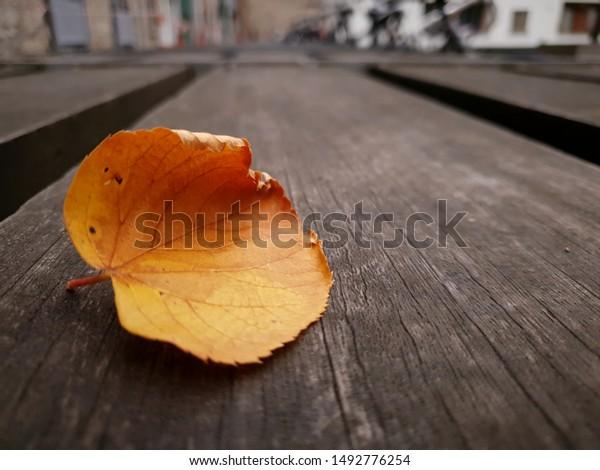 closeup-orange-dry-leaf-on-600w-14927762