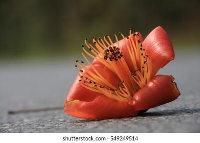 closeup orange flower on road