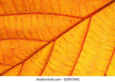 Closeup of an orange leaf texture of a plant