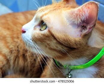 Closeup orange red cat