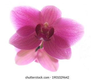 close-up of an orchid flower illuminated by backlight