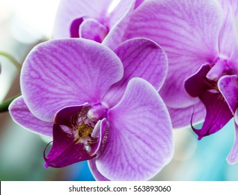 Closeup of orchid flower,pink orchid