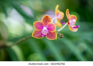 Closeup orchids wallpaper background print