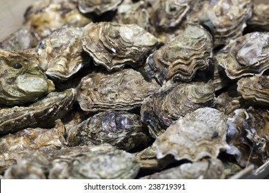 closeup of oyster shells for diner