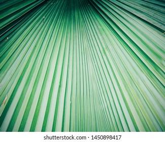 Closeup Palm leaf for background