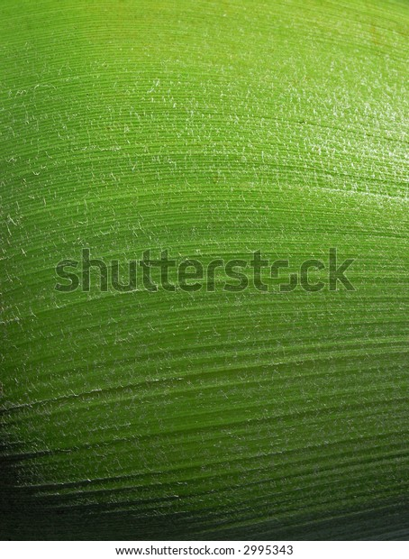 close-up of a palm tree
