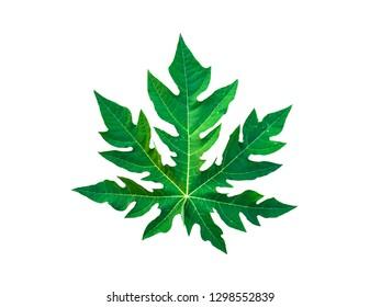Close-up of papaya leaves isolated on a white background