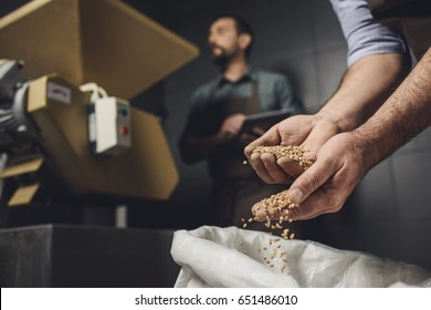 Close-up partial view of male brewery worker in apron inspecting bag with grains