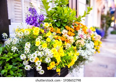 Closeup of pastel pink color siding house architecture sidewalk and multicolored yellow flowers in planter as decorations in Charleston, South Carolina