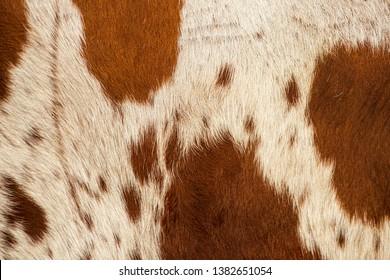 Closeup pattern of a Longhorn bull cowhide.