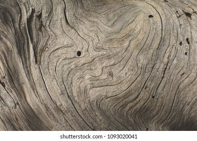 Closeup of the Pattern on Driftwood
