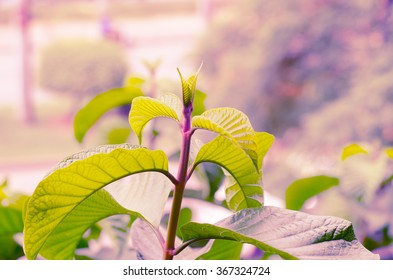 Closeup of the peak green plant leaves with warm color filter