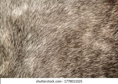Close-up of a pelt ,wool pony.Background animal hair