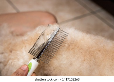 Closeup of person detangle fur of pet dog by combing at home