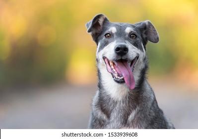 Closeup photo of an adorable dog. Outdoor photo