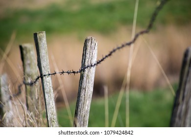 closeup photo of a barbed wire fence in the countryside