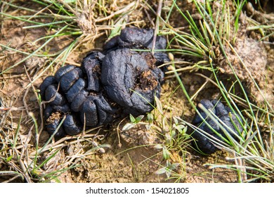 Closeup photo of cow dung