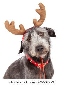 Closeup photo of a cute dog wearing Christmas reindeer antlers