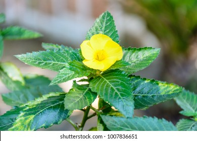 closeup photo of damiana flower