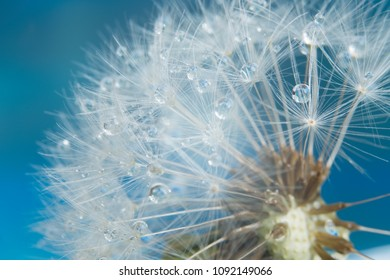 close-up photo of dandelion with drops
