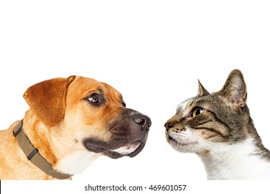 Closeup photo of dog and cat looking at each other with blank copy space on top.