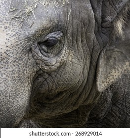 Close-up photo of and elephant.