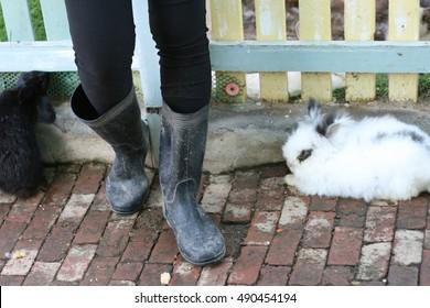 Closeup Photo Farmers Boots Rabbits