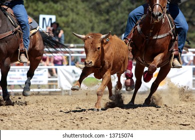 Close-up photo of fast rodeo action during a Steer Wrestling event (focus point on running steer).