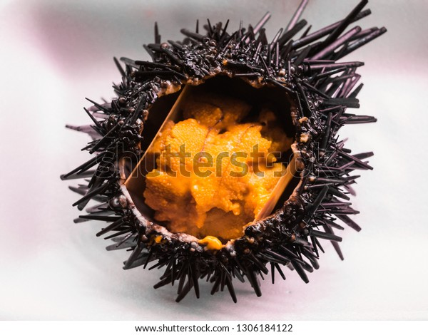 Closeup photo of fresh sea urchin (uni) in Japan