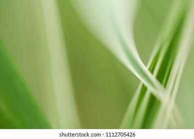 Close-up photo of green & white leaves.  Swartz Creek, MI, USA.