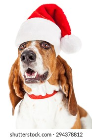 Close-up photo of a happy and smiling Basset Hound dog wearing a red santa claus hat and collar