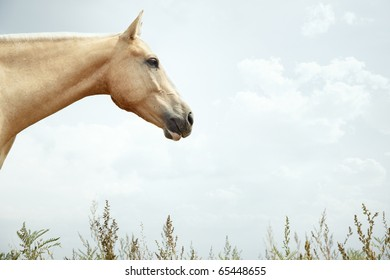 Close-up photo of the horse outdoors. Natural light and colors