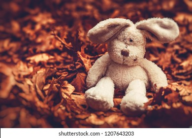 Closeup photo of a little sad plush rabbit sitting on the ground covered with old dry tree leaves in the forest, lonely and abandoned small friend of some kid