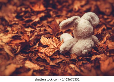 Closeup photo of a little soft toy rabbit sitting on the ground covered with old dry leaves in the forest, awaiting for a child, sadness and frustration concept