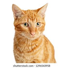 Closeup photo of orange tabby cat over white