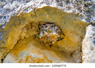 Close-up photo of the wasp nest