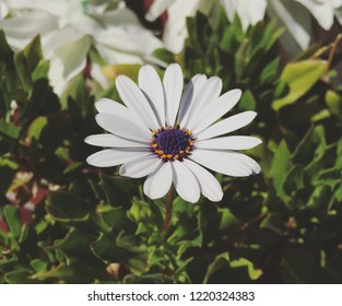 Closeup photo of white flower.